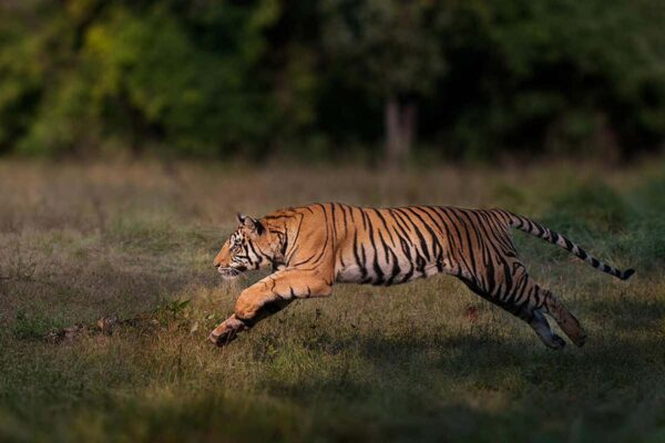 The Science Behind Tiger Pattern and Other Animals