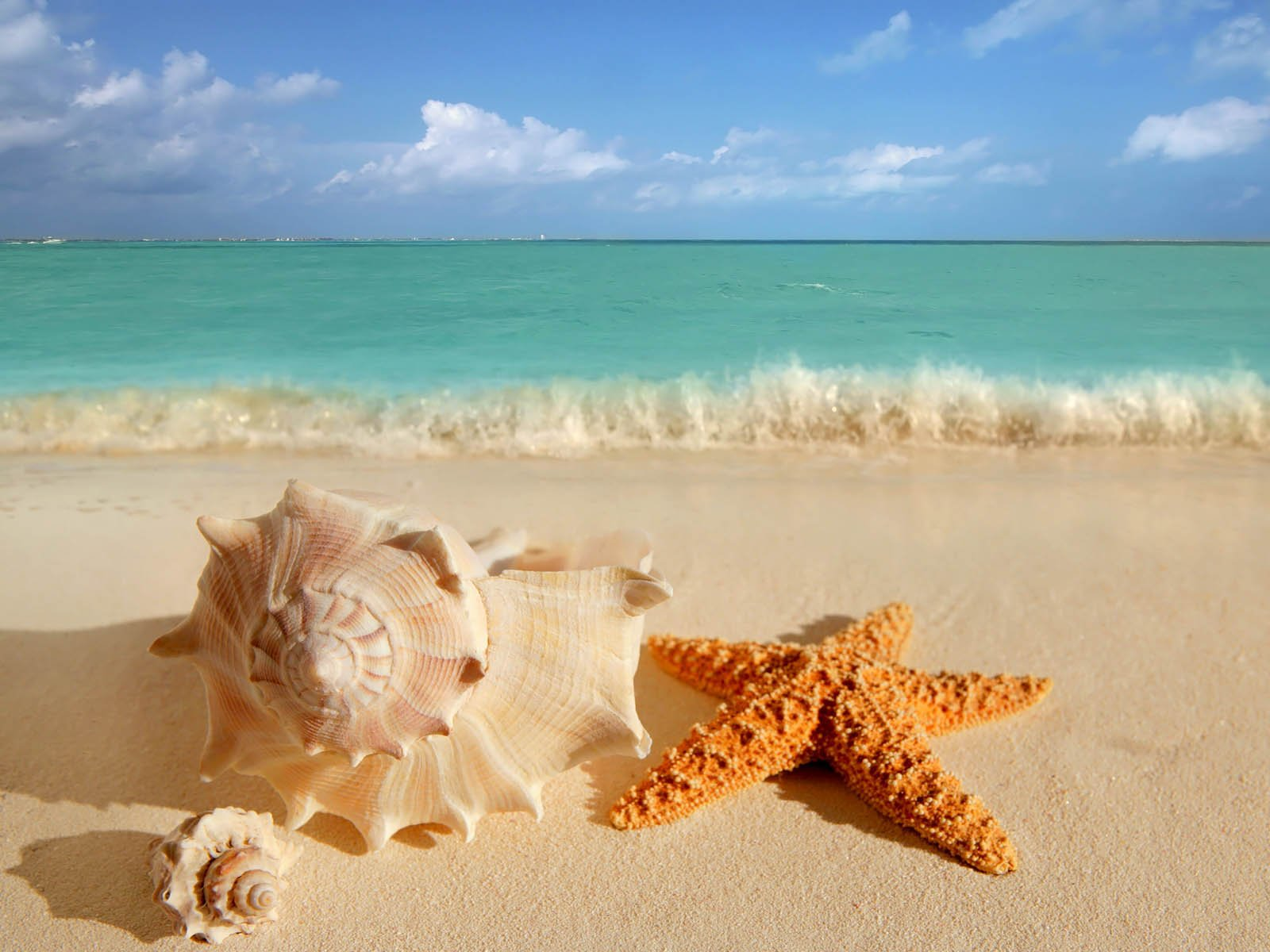 Some facts about starfish